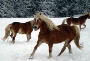 snowplay2