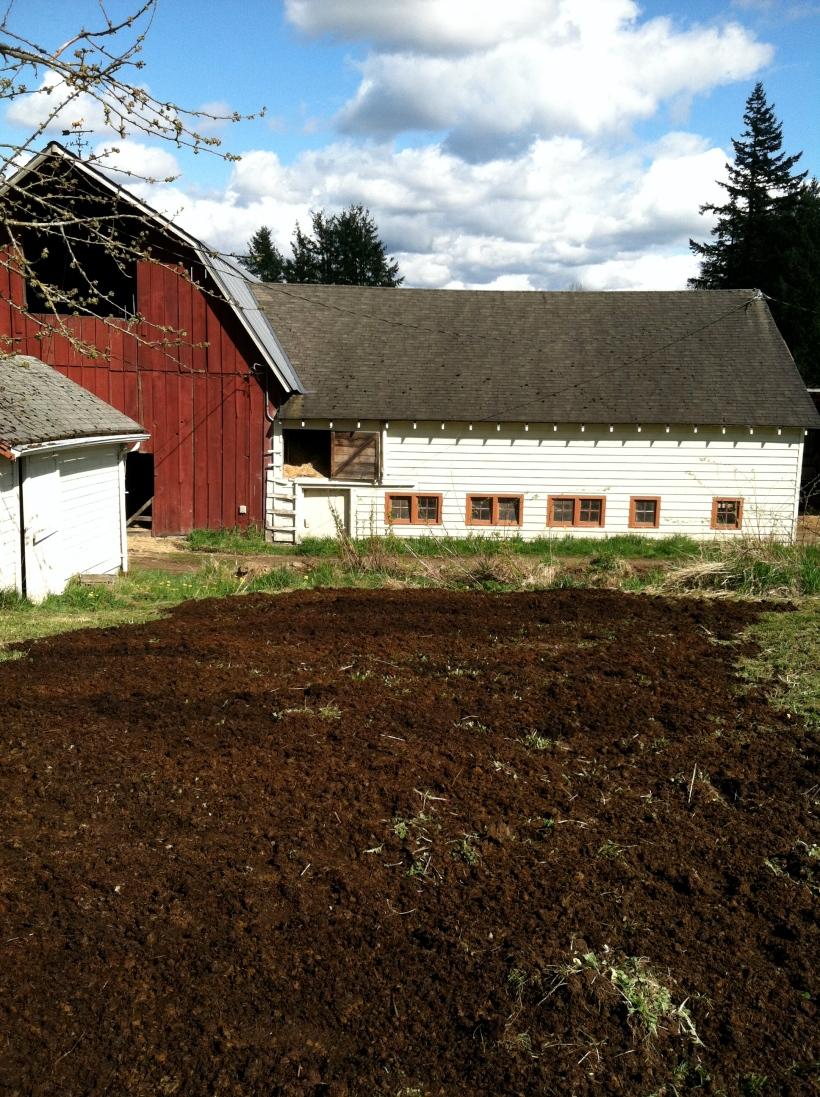 horse manure composted garden