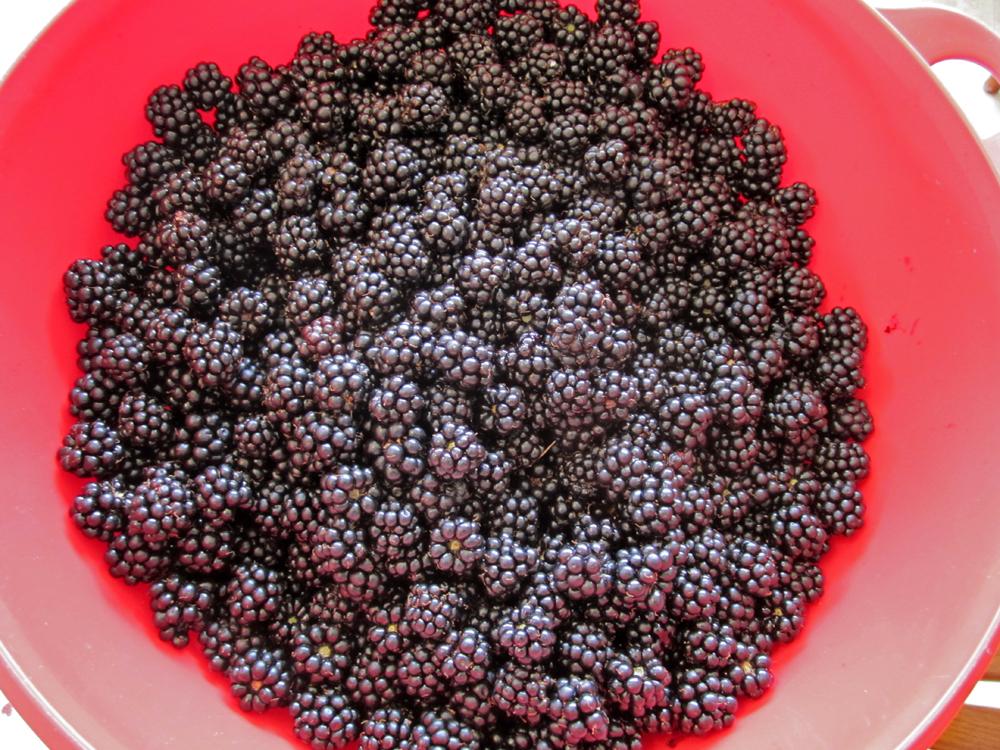 blackberrybowl