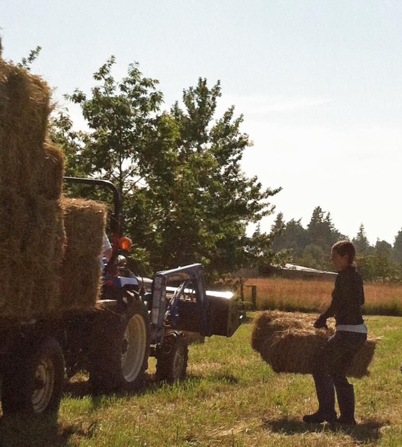 haying2012