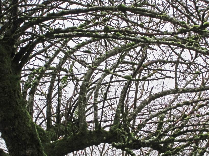 branchesdec