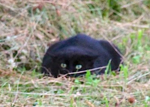 catlikeobservation