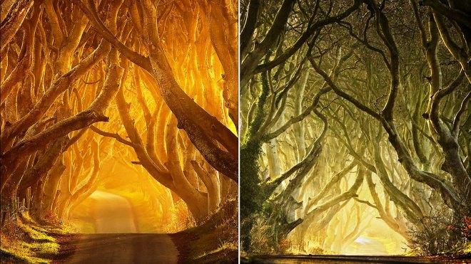 photos of Dark Hedges, Ireland