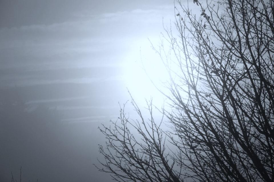 graysun