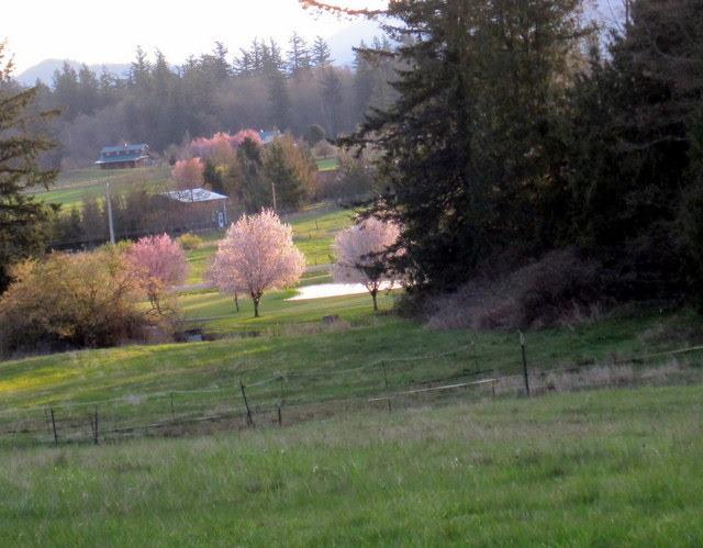 photo by Chris Lovegren from our farm hilltop, Easter Sunrise 2012