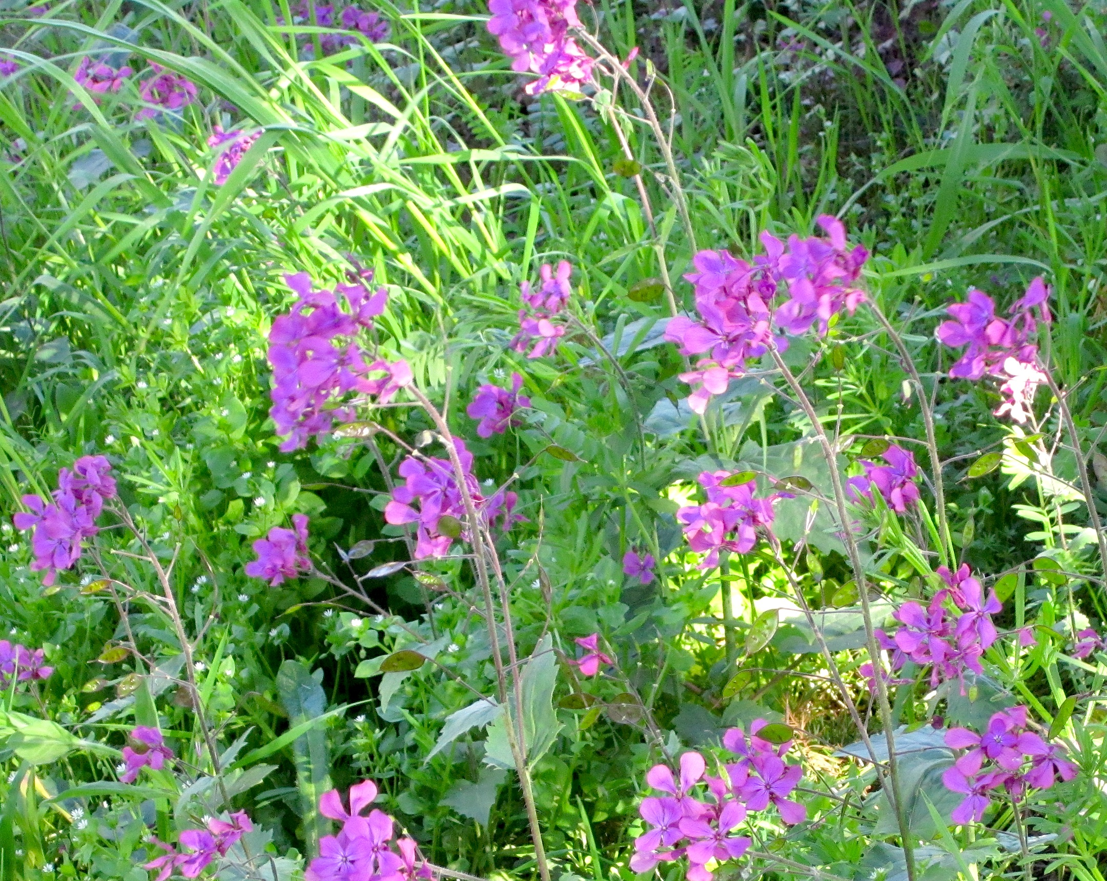 maywildflowers