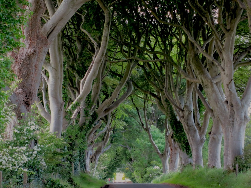 The Dark Hedges in Northern Ireland --photo by E Gibson