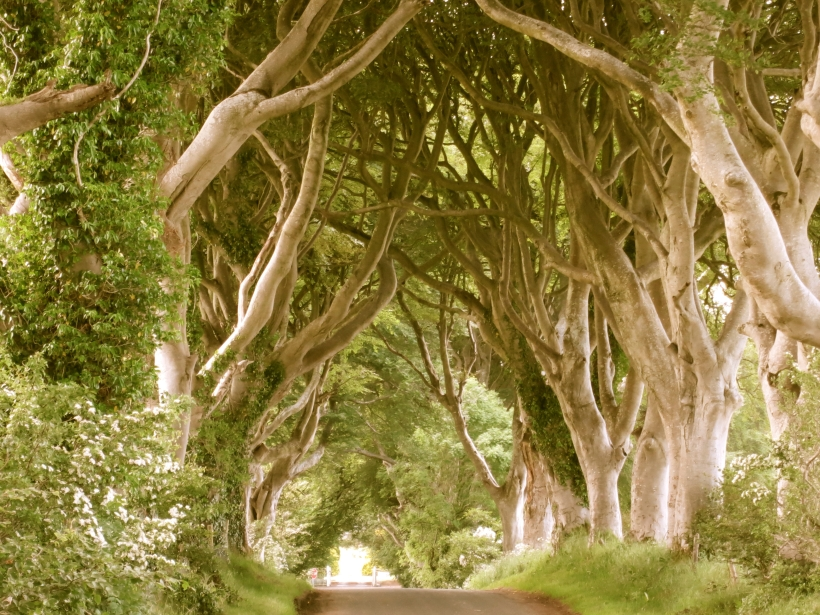 darkhedges2antique