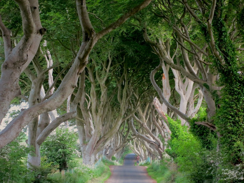 The Dark Hedges --photo by E Gibson