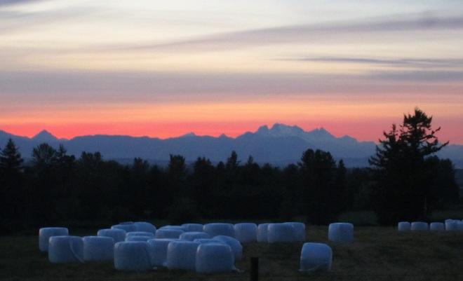 marshmallow fields forever