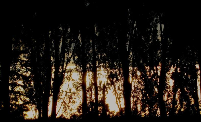 sunsetpoplar
