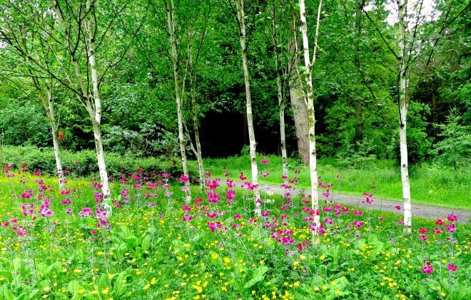 birchwildflowers