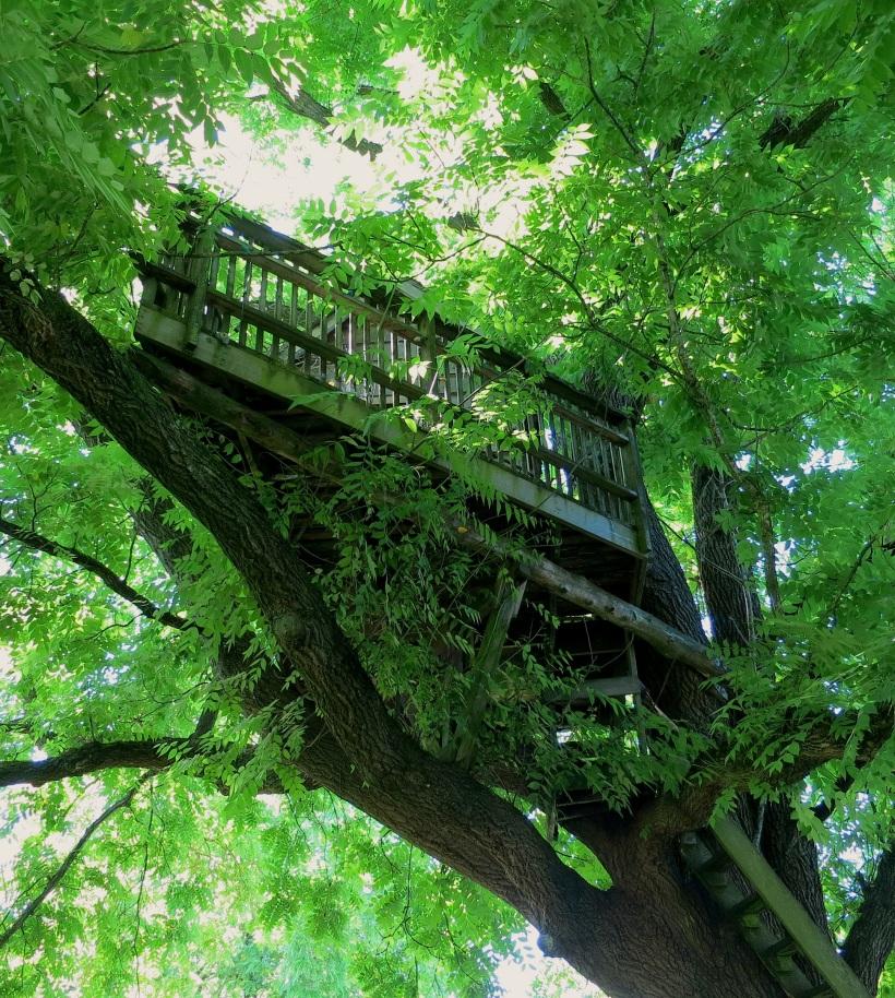 treedeck