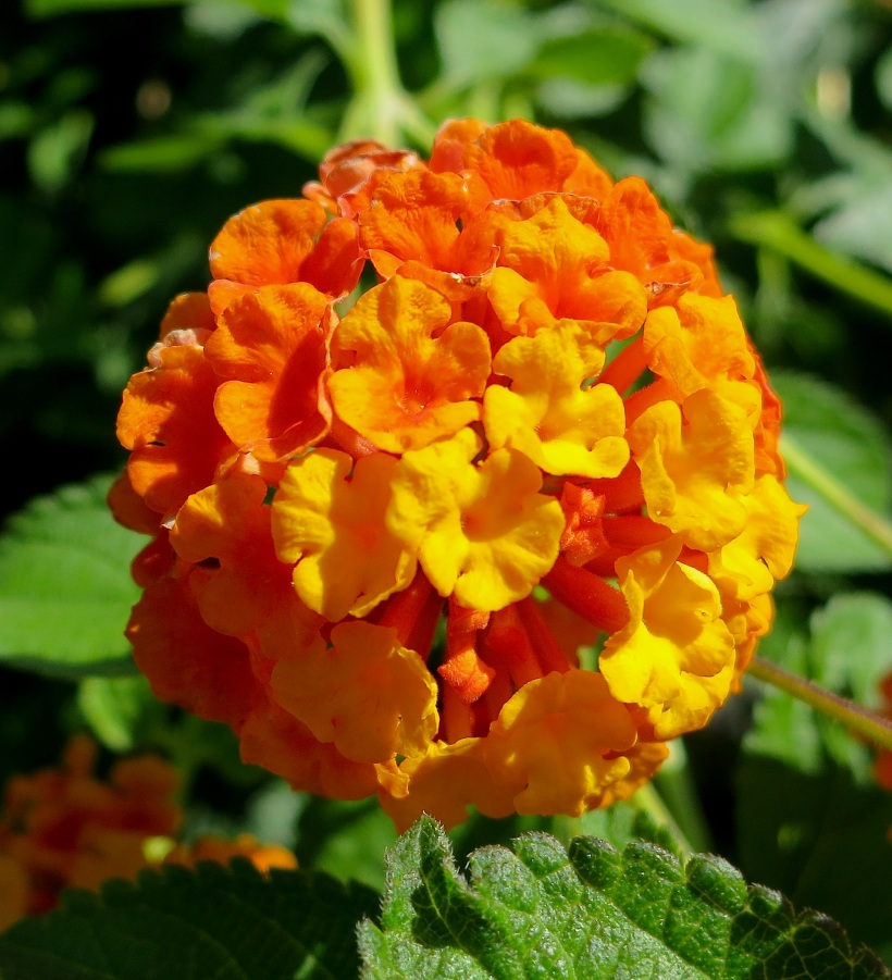 yelloworange