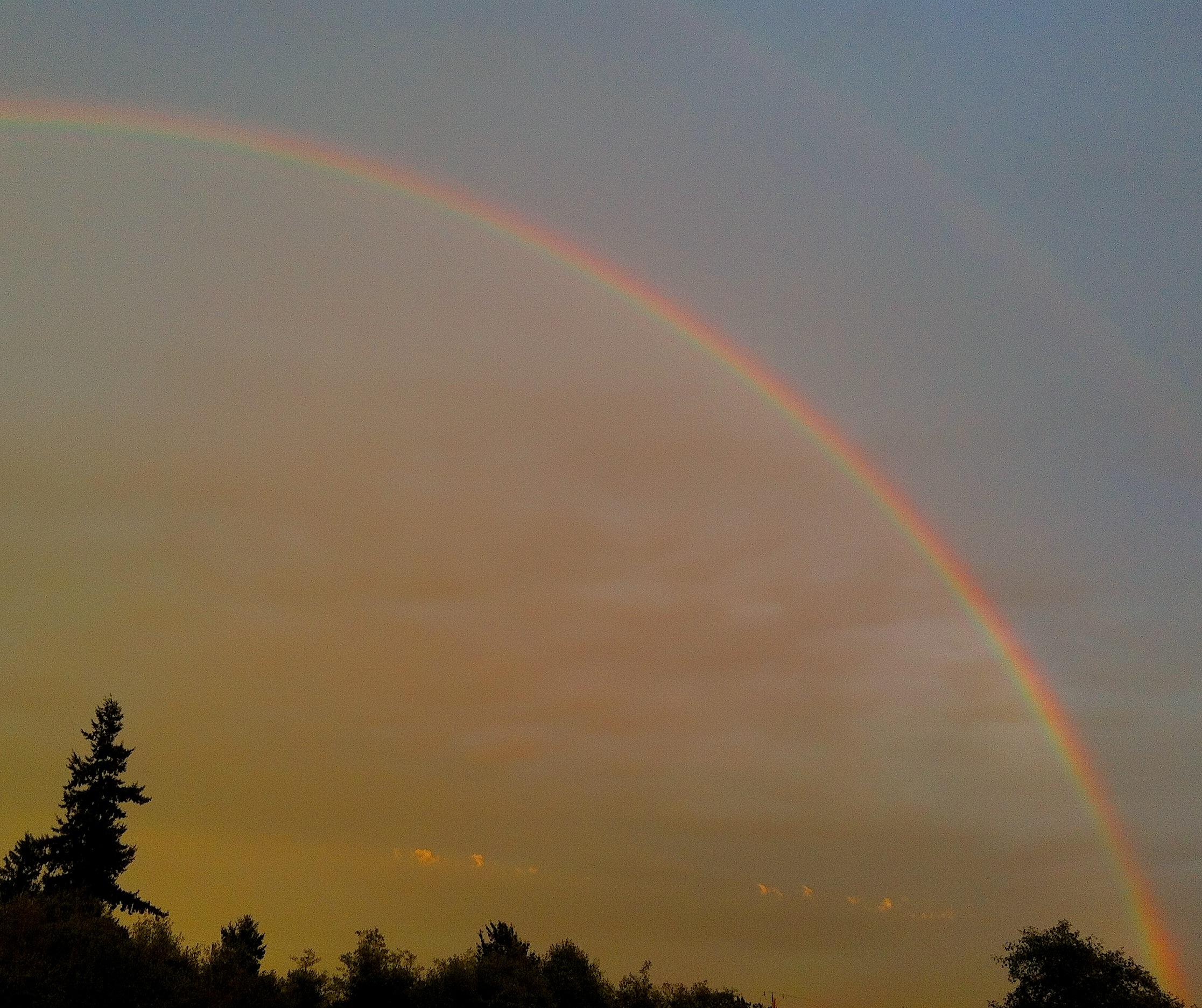 rainbow8253