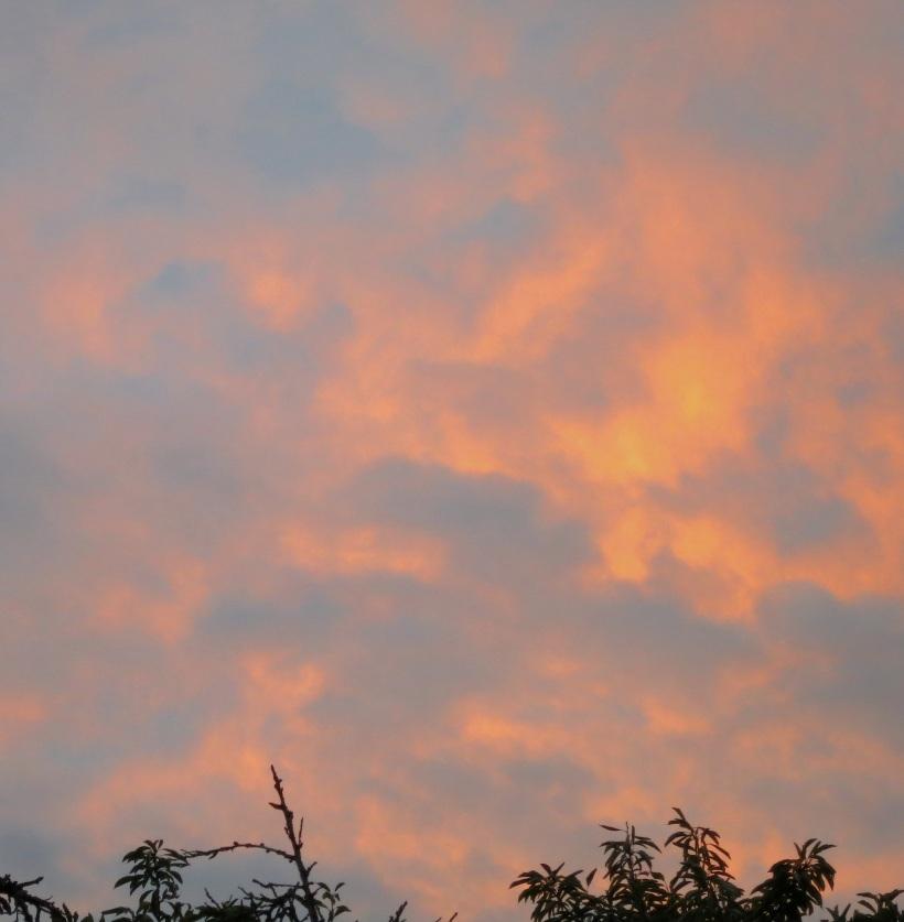 sunrise8271