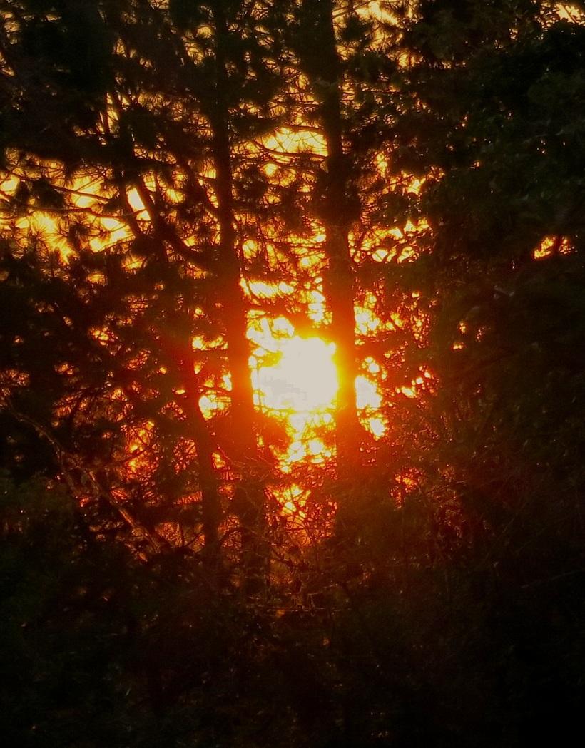 sunset 8311