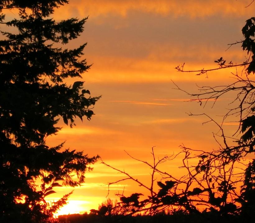 sunset8224