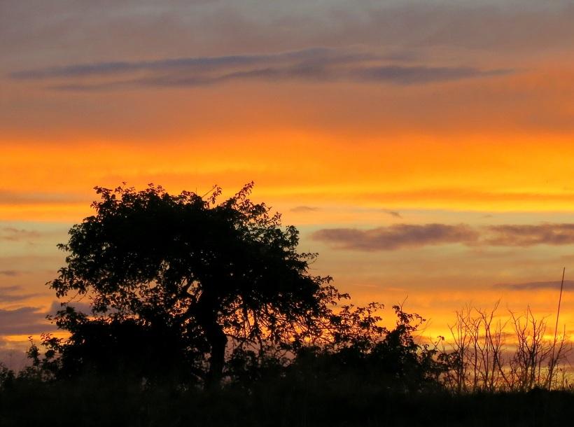 sunset8241