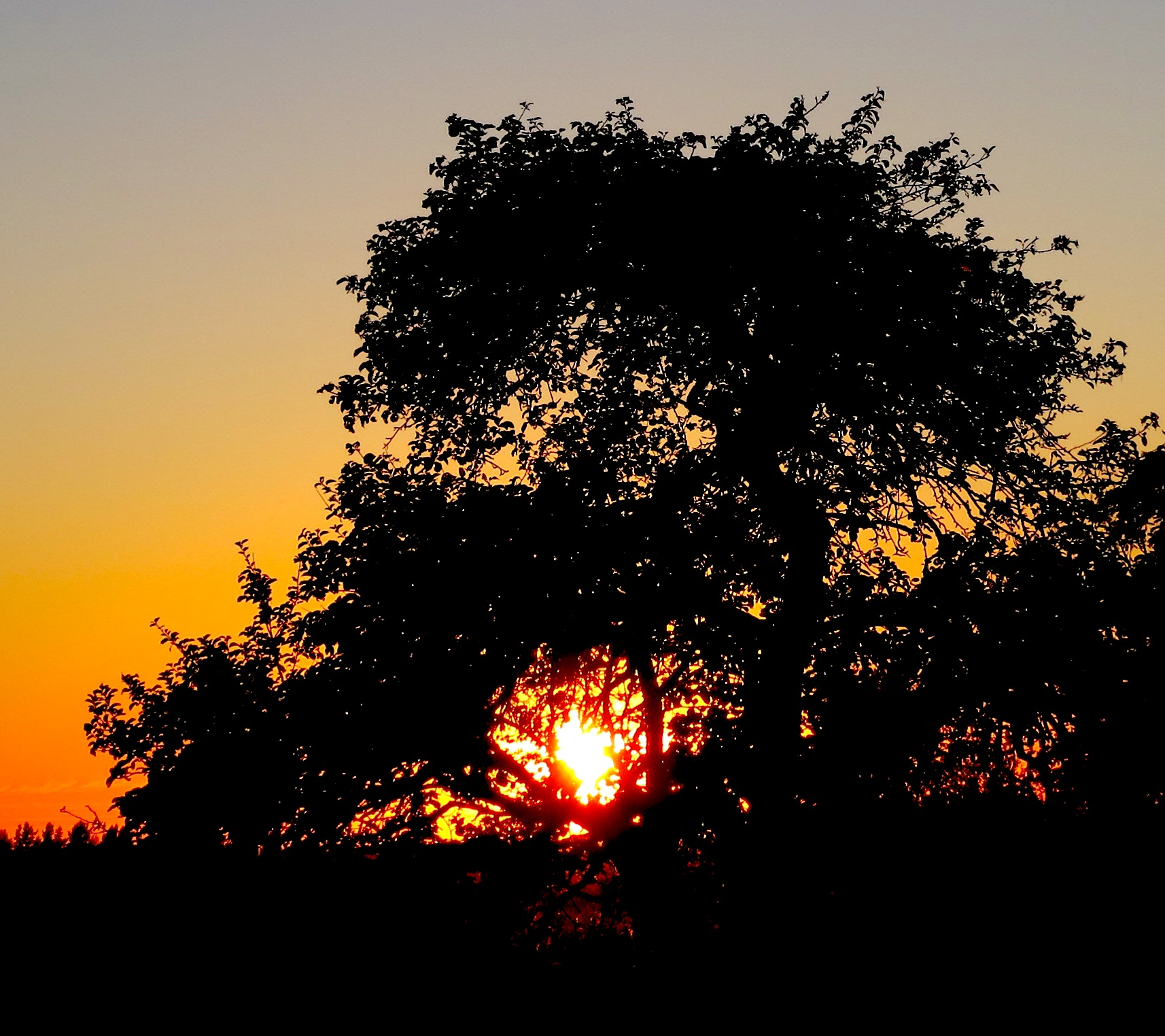 sunset83111
