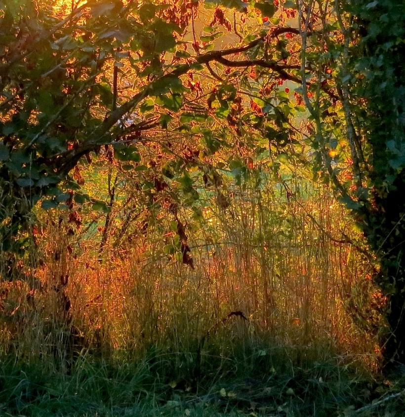 sunset8314