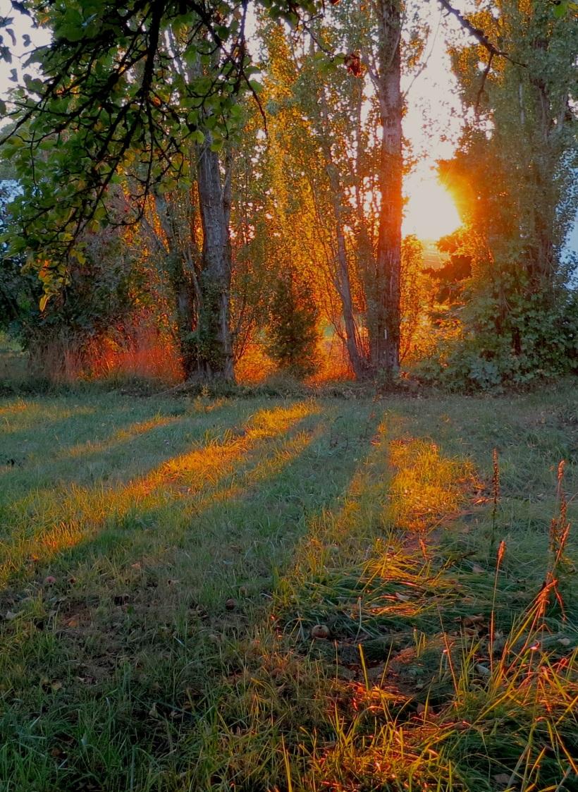 sunset8315