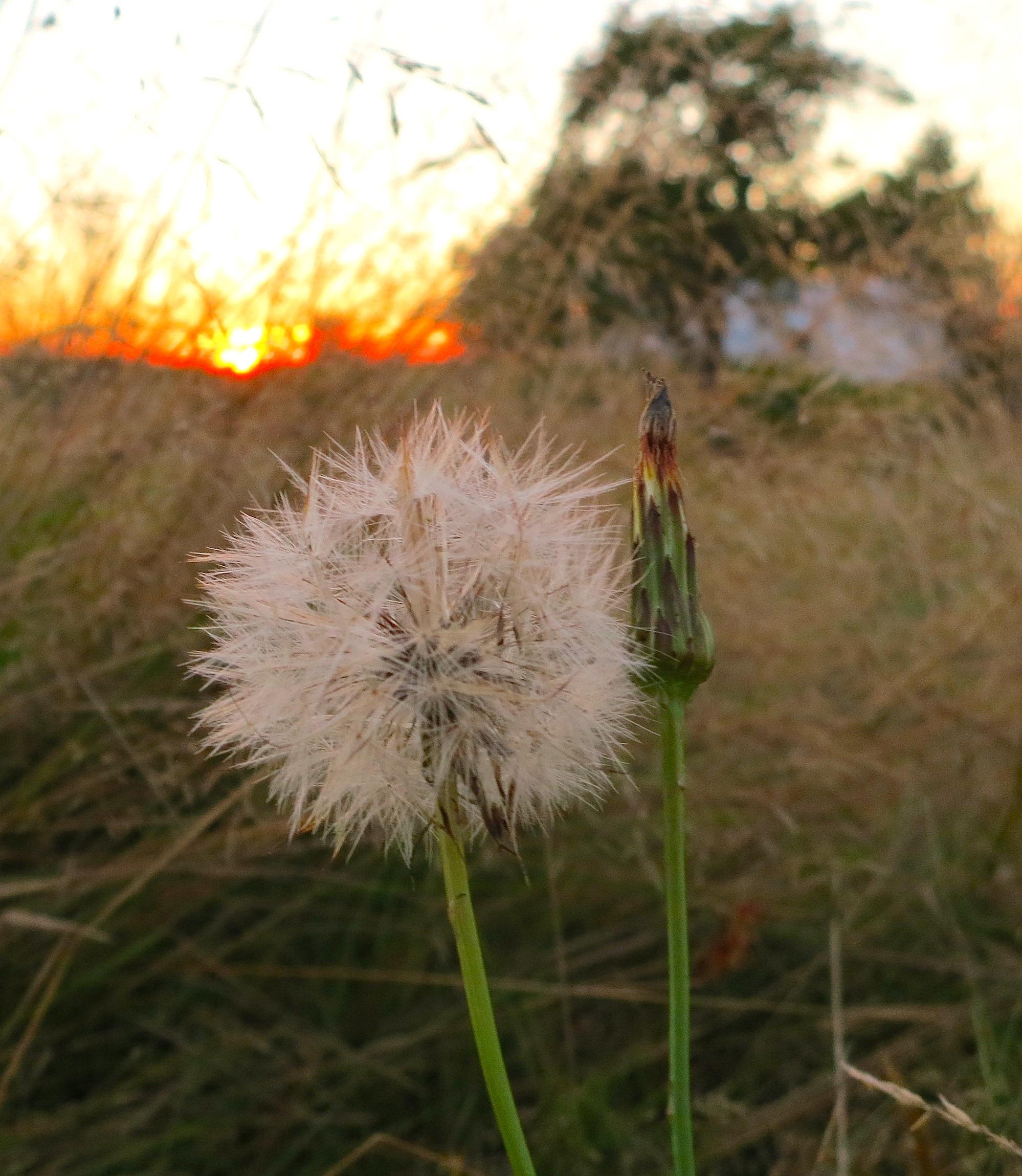 sunset8316