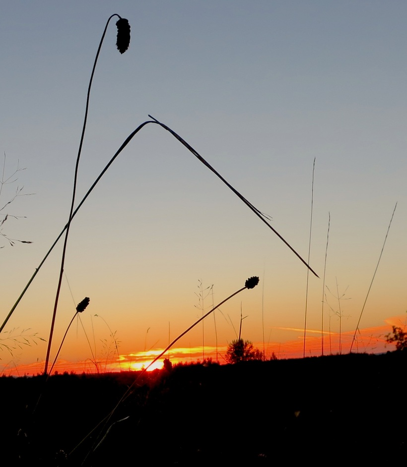 sunset8317