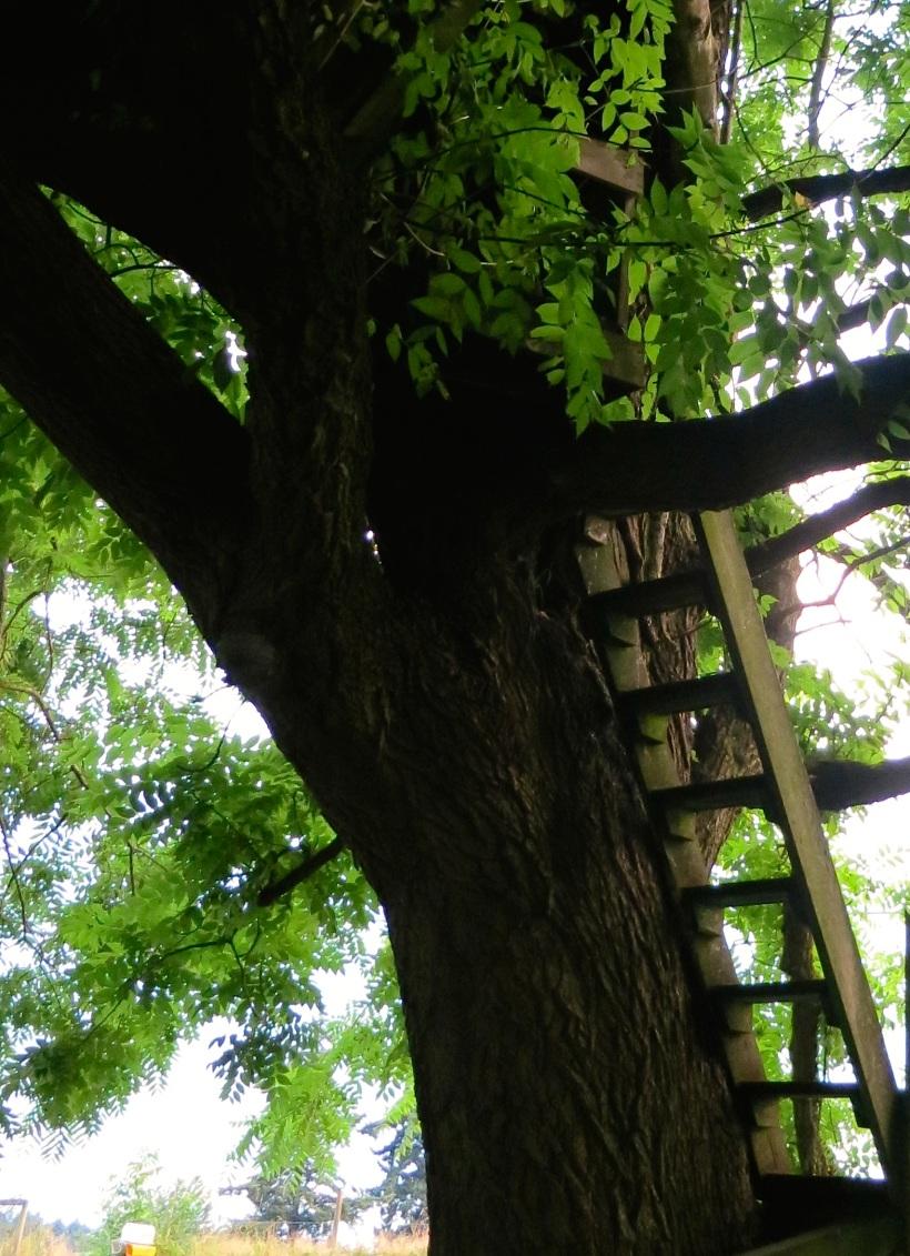treesteps
