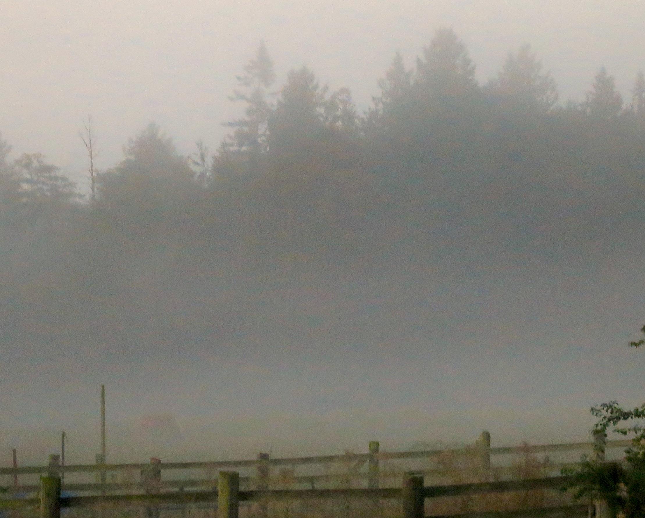 fog913