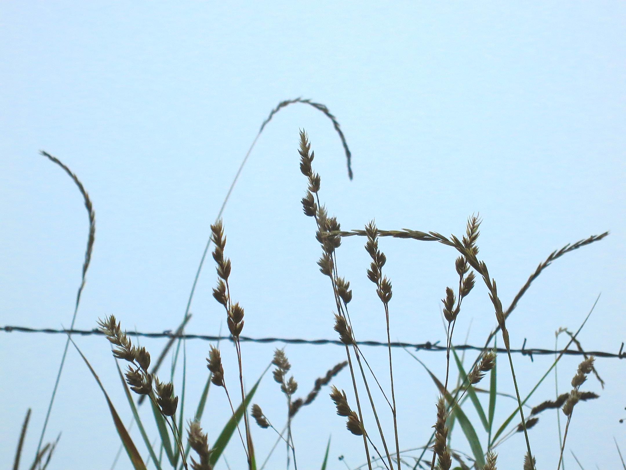 morninggrasses