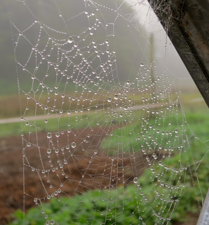 morningweb2