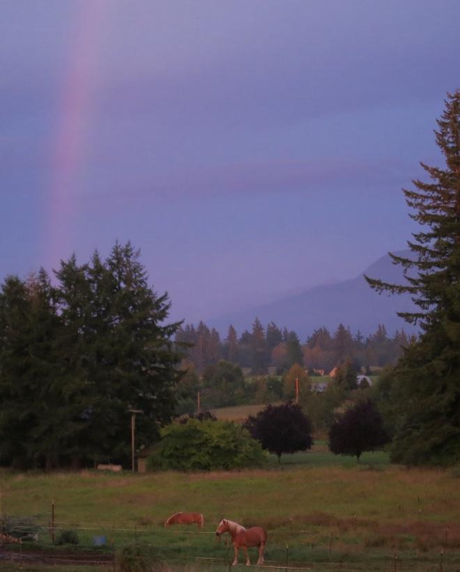 rainbow96