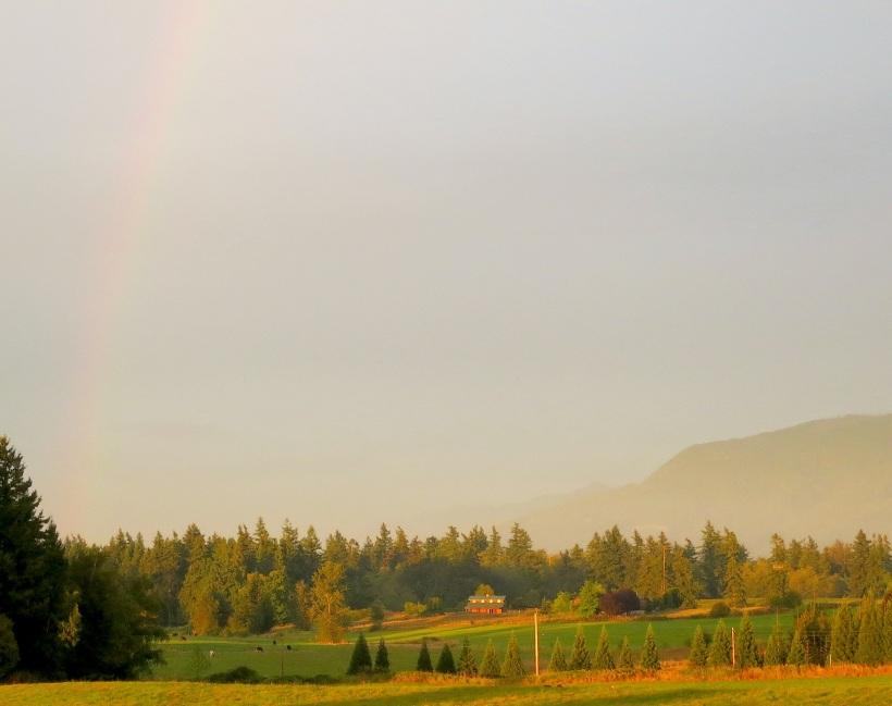 rainbow961