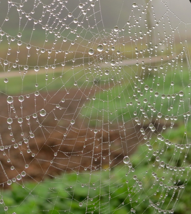 silentweb
