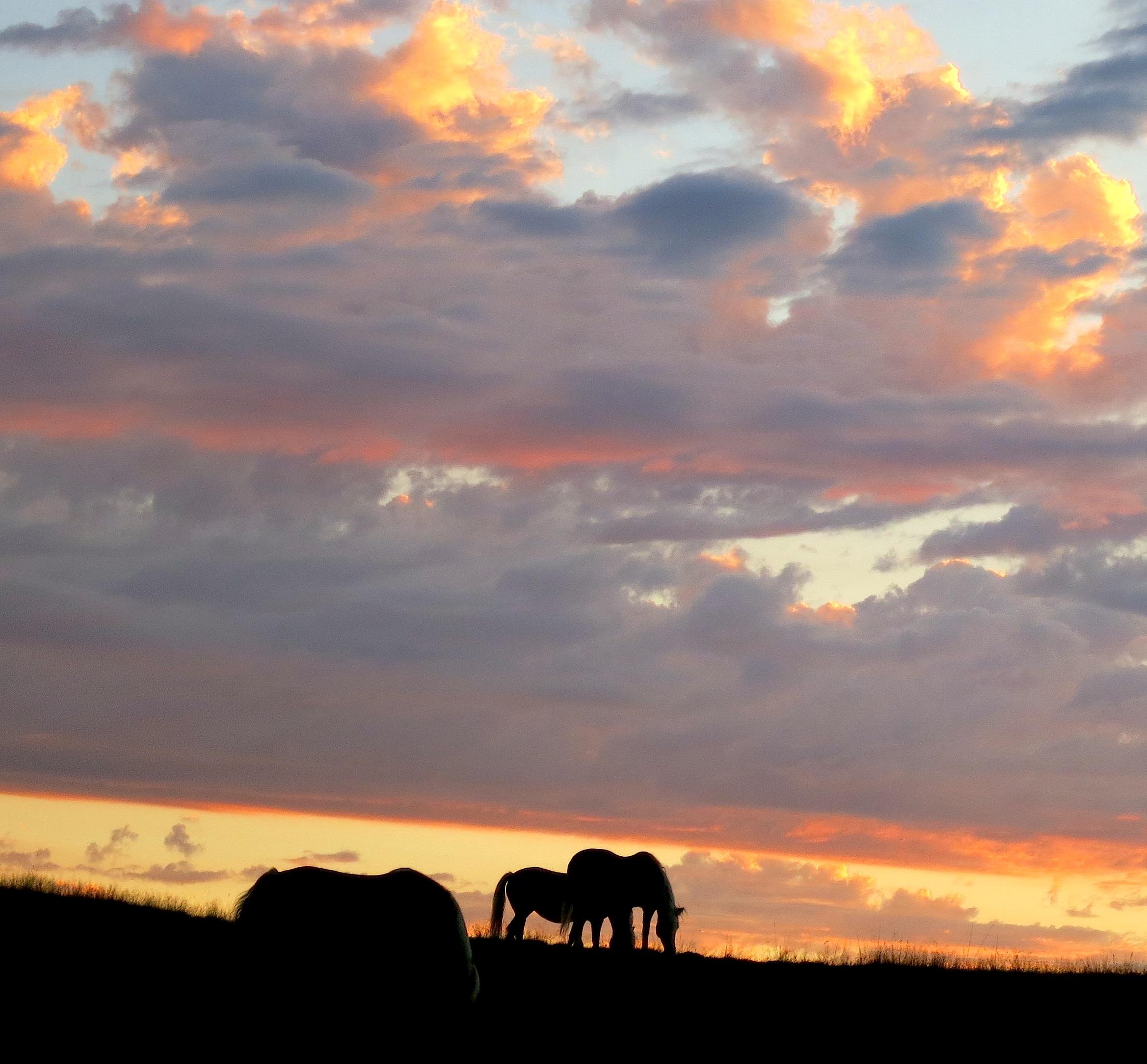 sunset92horses