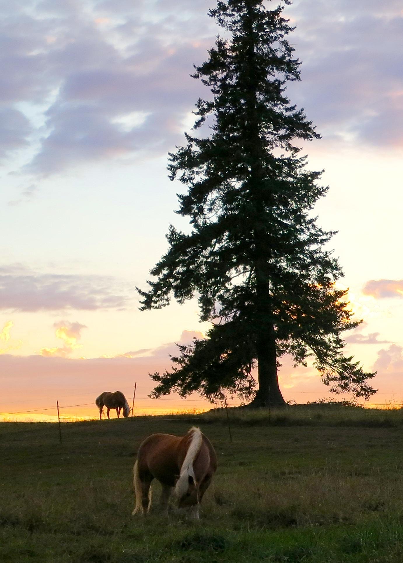 sunset92horses2