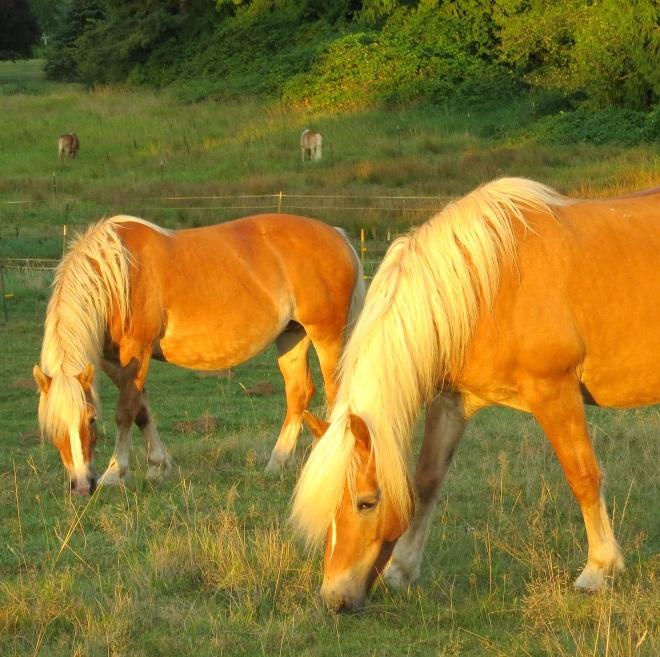 sunset92horses3