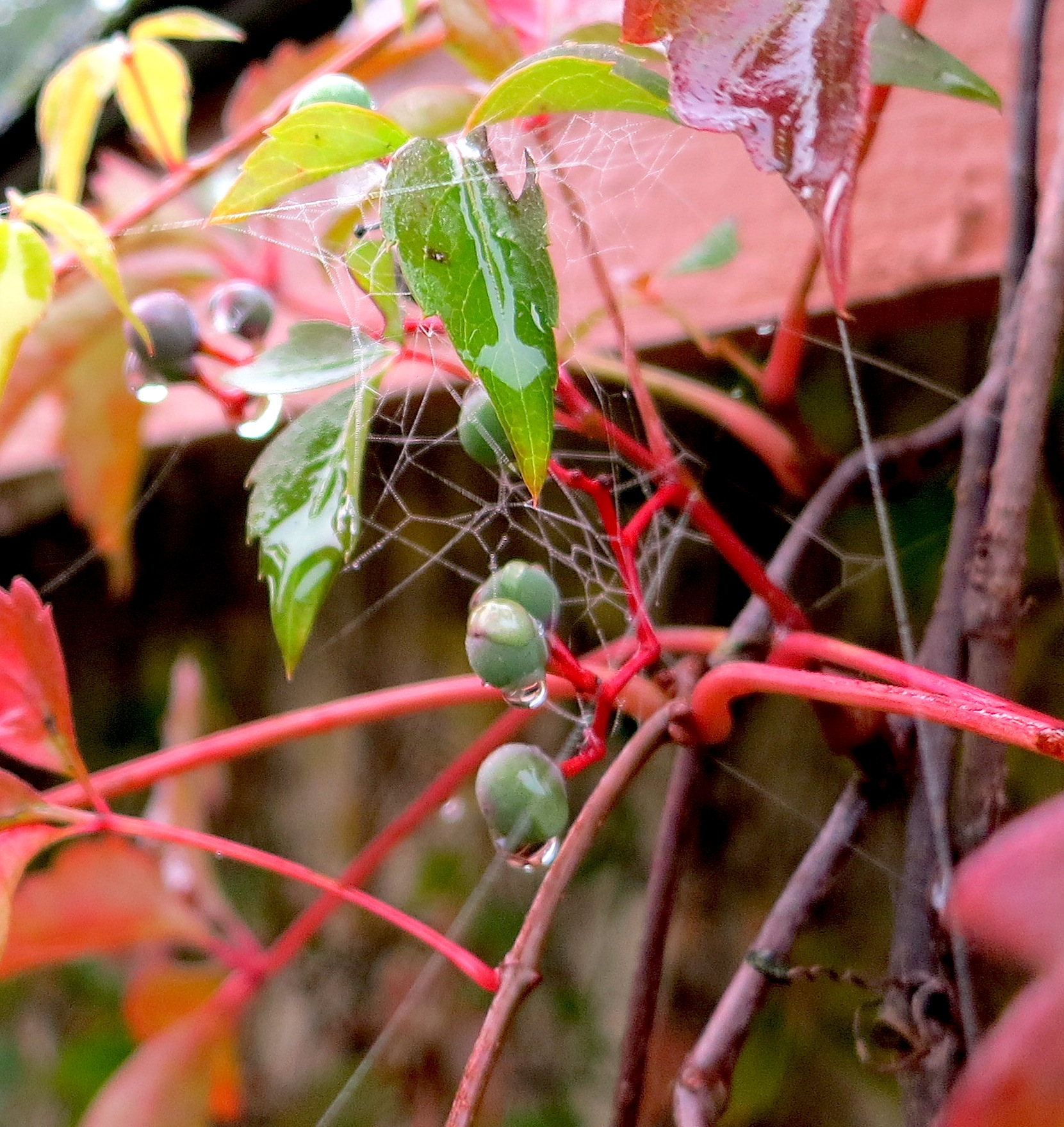 creeperwebberry