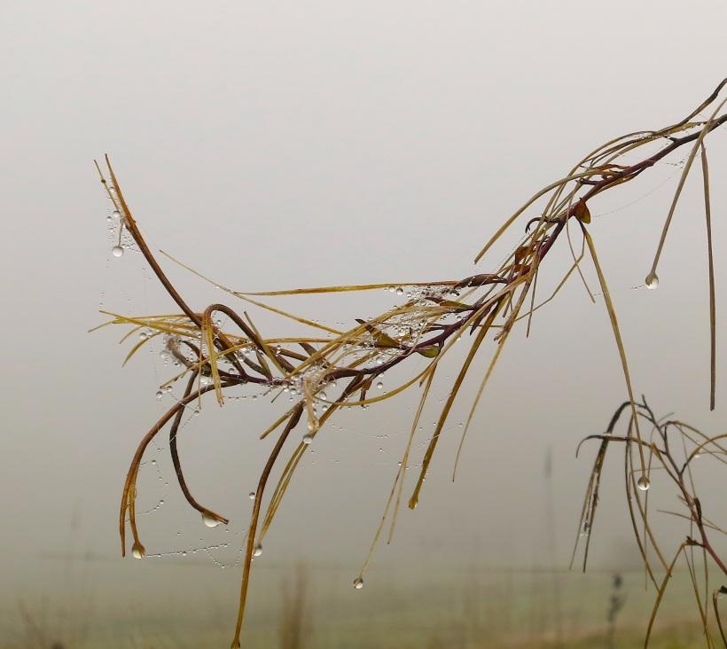 fog101915