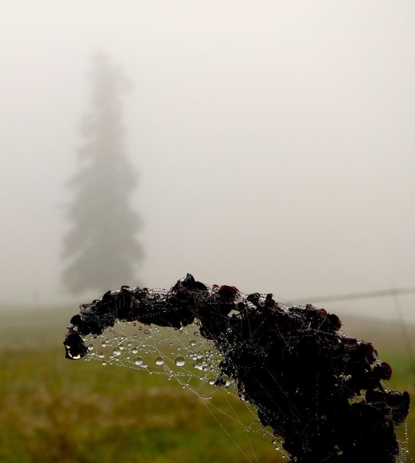 fog101917