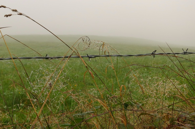 fog101922