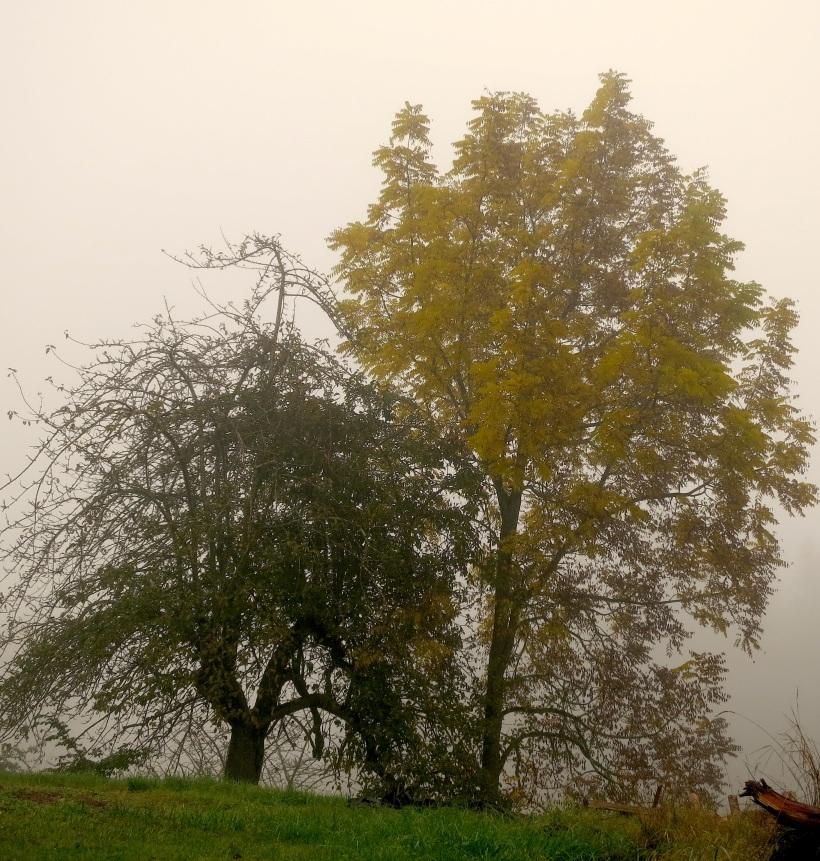 fog101930