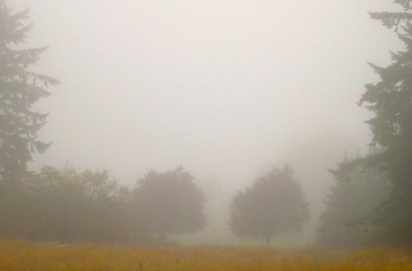 fog101939