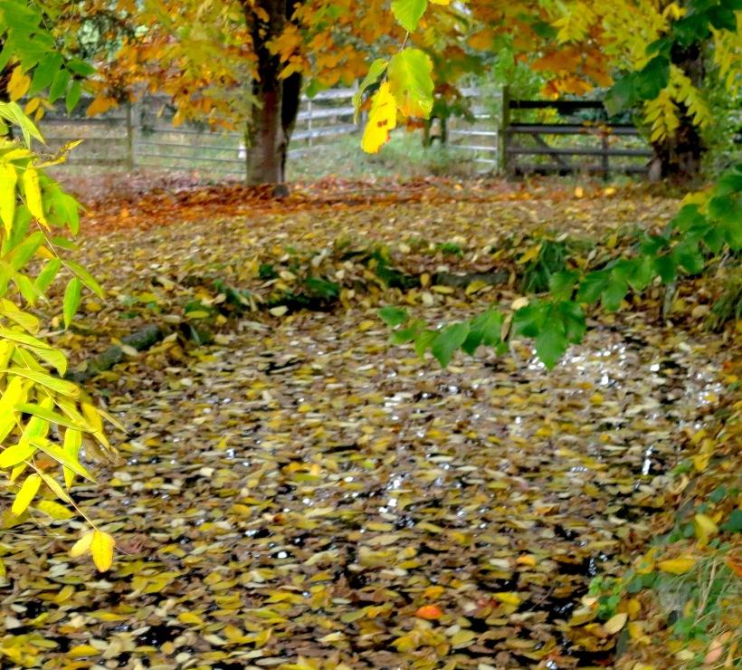 pondyard