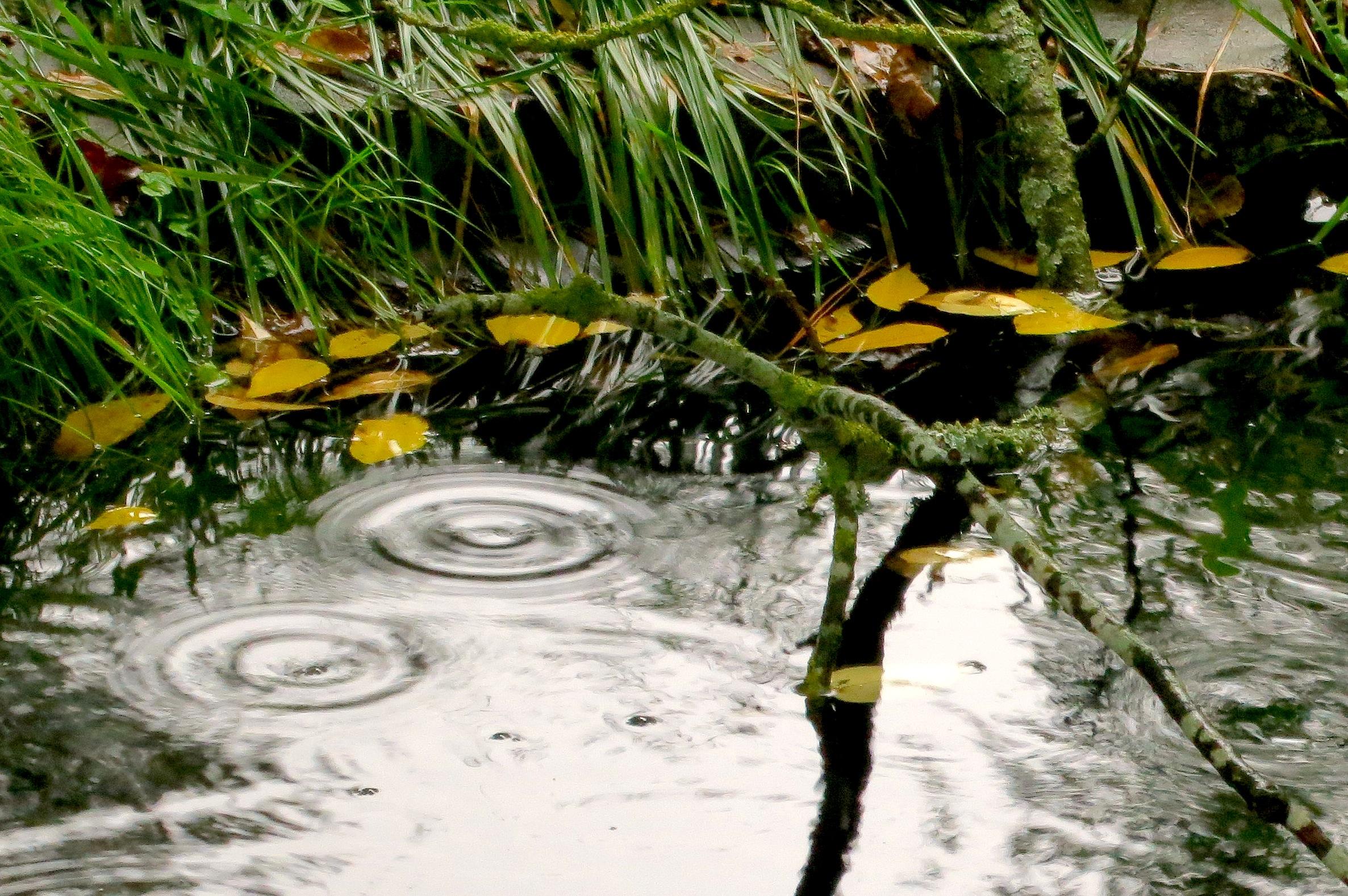 rainypond