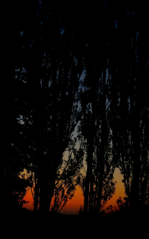 sunset10223