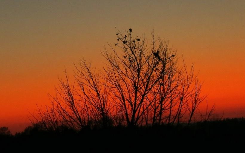 sunset10235