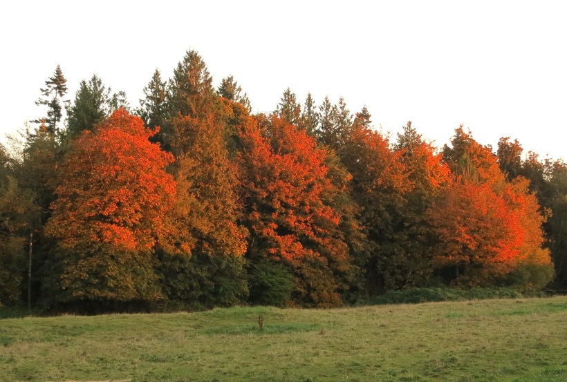 woodsonfire