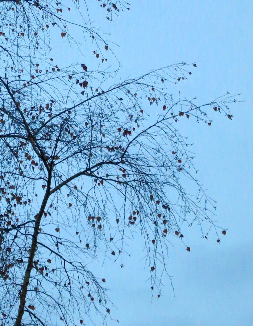 branches6